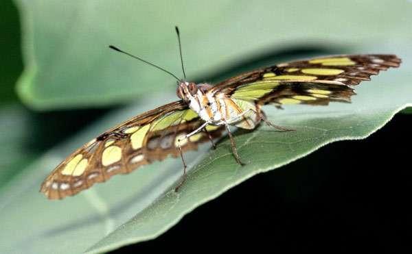 Бабочка крупным планом, фото насекомые фотография изображение