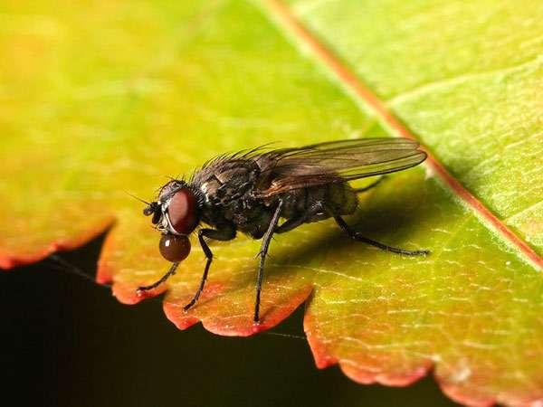 Муха, фото насекомые фотография картинка
