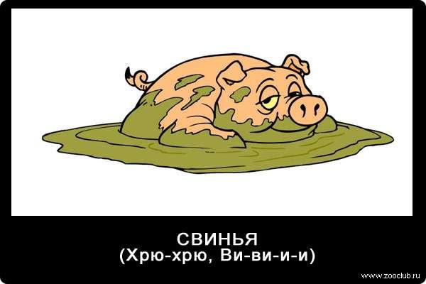Голос свиньи, поросенка, хрю-хрю, ви-ви-и-и, звуки животных для детей