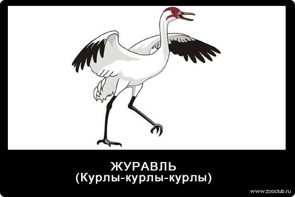 Голос журавля, курлы-курлы-курлы, звуки животных для детей