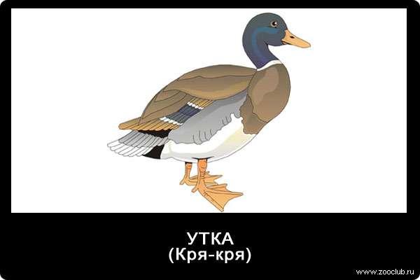 Звуки утки, кря-кря, звуки животных для детей