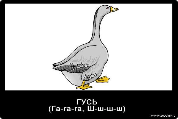 Звуки гуся, га-га-га, ш-ш-ш-ш, звуки животных для детей