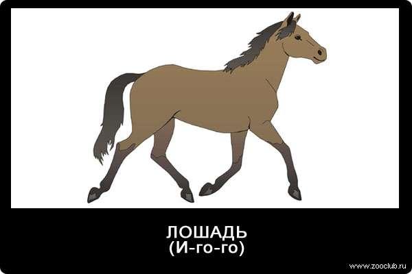Голос лошади, и-го-го, звуки животных для детей