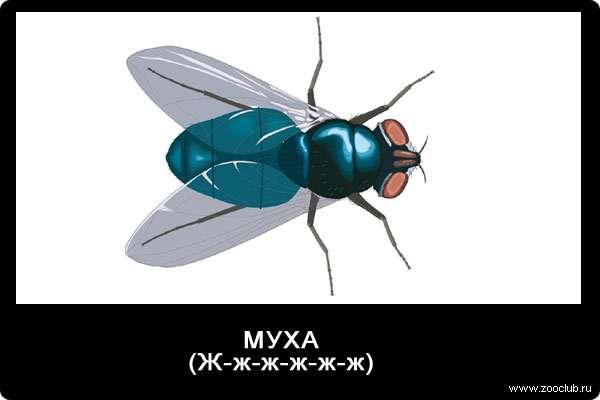 Звуки мухи, ж-ж-ж-ж-ж, звуки животных для детей