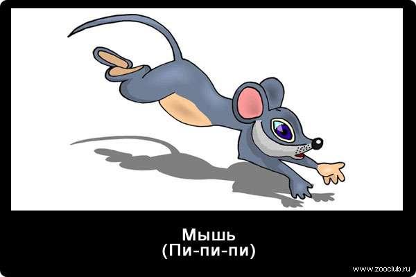 Голос мышки, пи-пи-пи, звуки животных для детей