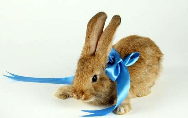 Кролик с бантом, фото домашние животные фотография