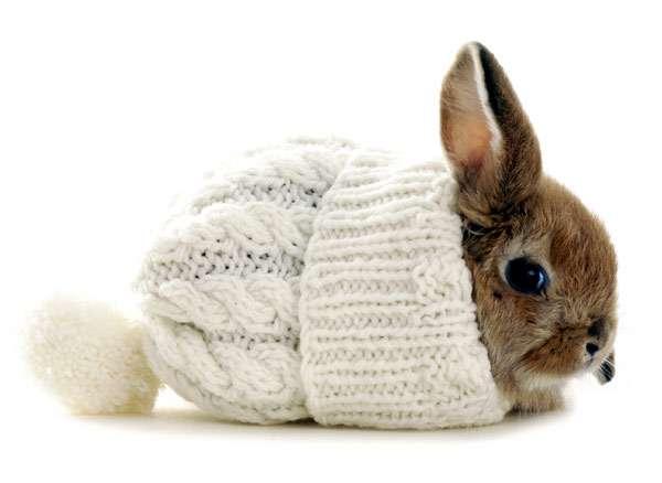 Карликовый кролик в шапке, фото домашние животные фотография картинка