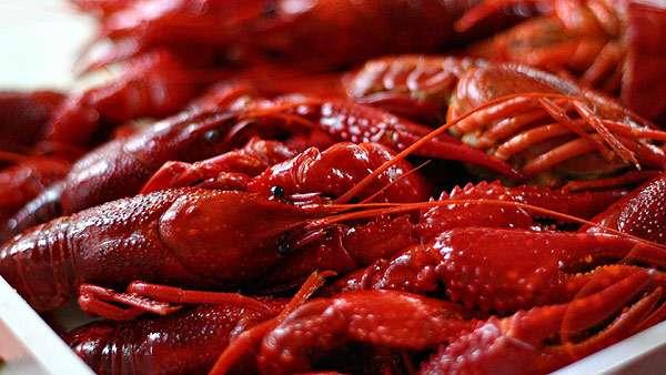 Вареные раки, красные раки, фото ракообразные фотография