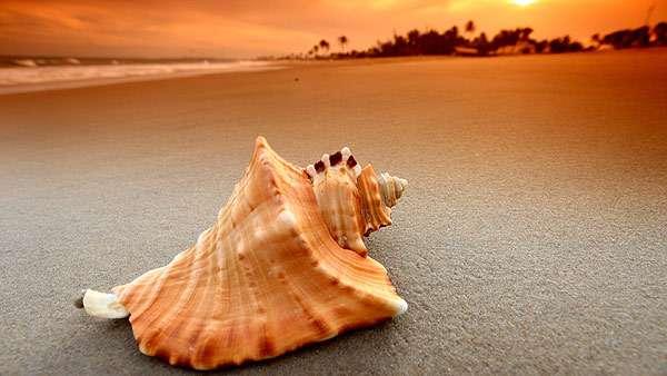 Морская раковина на берегу моря, фото беспозвоночные фотографии
