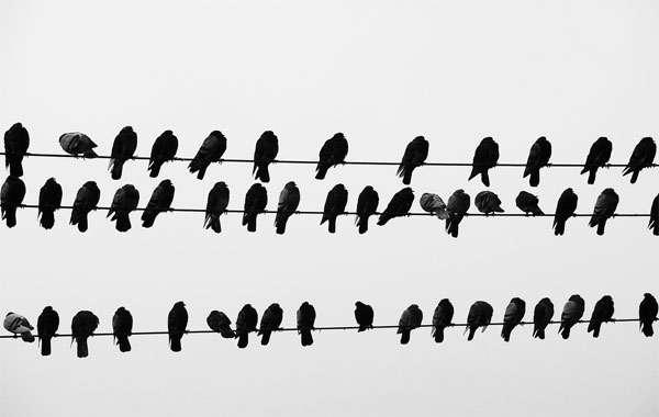 Голуби, сидящие на проводах, фото птицы фотография