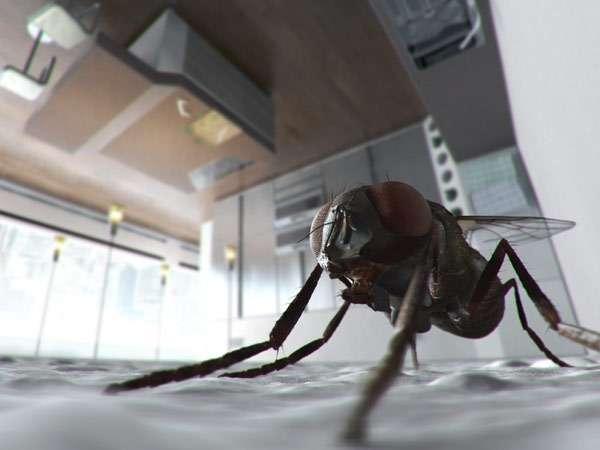 Комнатная муха на кухне, фото двукрылые насекомые фотография