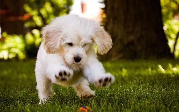 Играющийся щенок, фото болезни собак фотография картинка