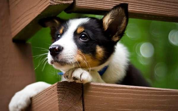 Щенок, фото собаки фотография