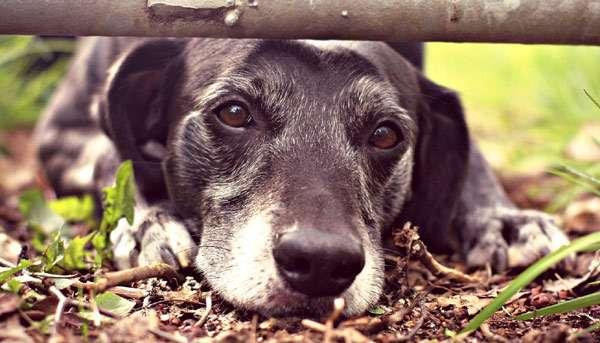 Пожилая собака, старая собака, фото здоровье собак фотография