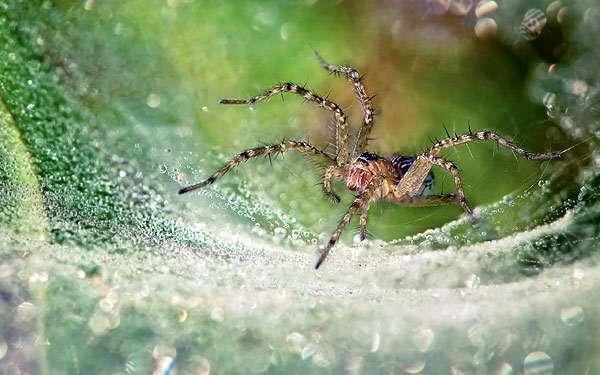 Паук в паутине, фото паукообразные фотография картинка