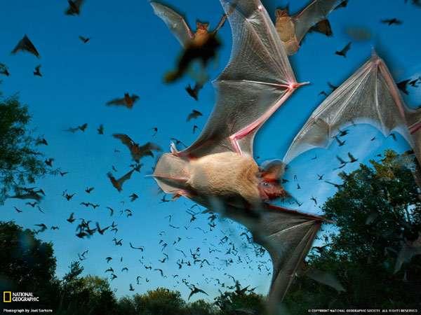 Летучие мыши, фото рукокрылые животные фотография