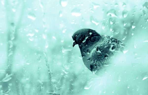 Голубь за окном, фото птицы фотография картинка