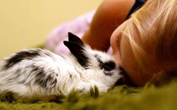 Кролик и девочка, фото фотография картинка