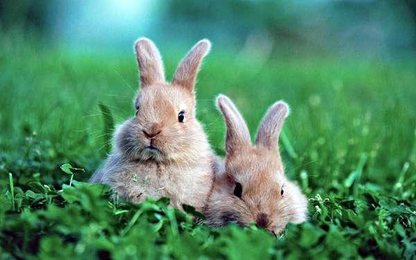 Домашние кролики в траве, фото фотография изображение