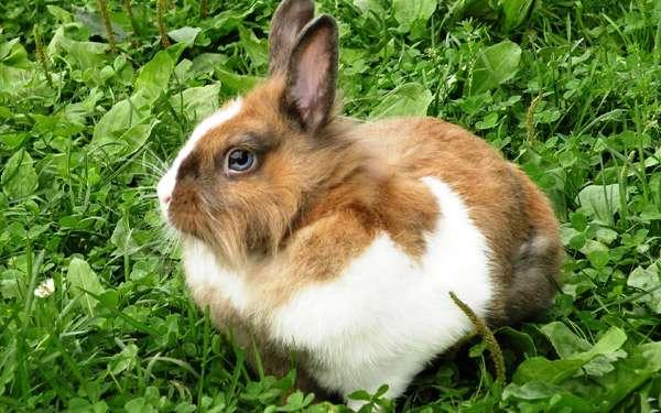 Голубоглазый кролик в траве, фото фотография картинка