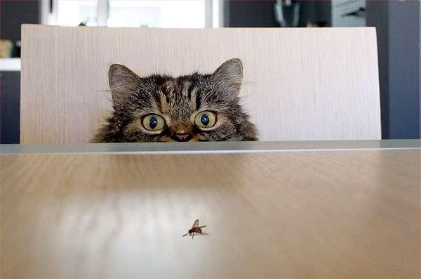 Кошка охотится на муху, фото смешная картинка фотография