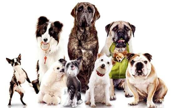 Собаки разных пород, фото кормление собаки фотография