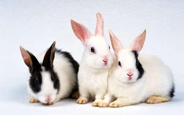 Декоративные кролики, фото фотография картинка