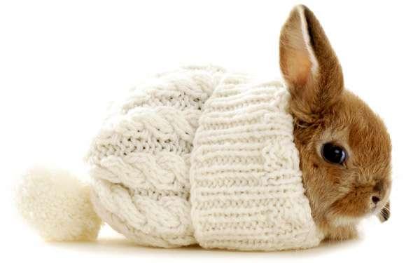 Карликовый кролик в вязанной шапке, фото фотография картинка