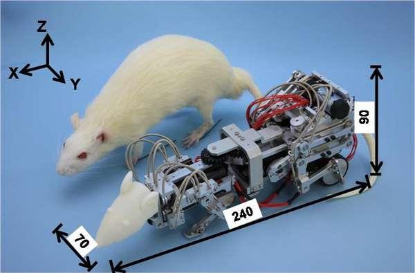 Робокрыс Waseda Rat-3, фото фотография