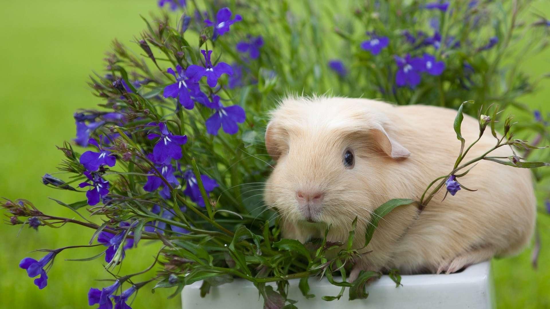 Фото цветы и животны