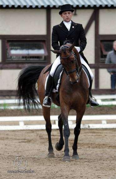 Выездка лошади, фото фотография