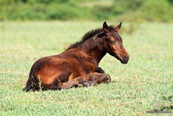 Жеребенок, фото фотография лошади