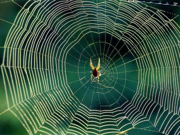 Паук в центре паутины, фото фотография