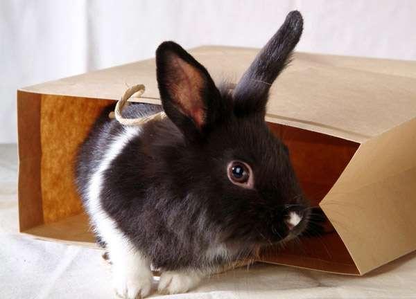 Домашний кролик в бумажном пакете, фото фотография