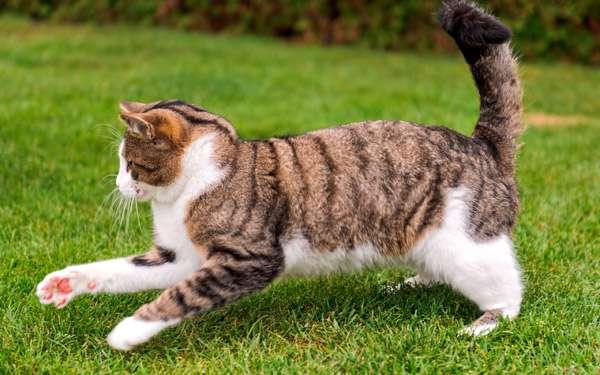 Бегущий кот, фото фотография