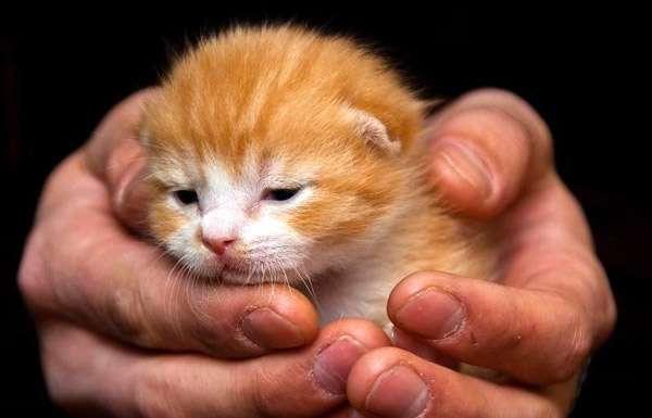 Маленький рыжий котенок на руках, фото кошки фотография