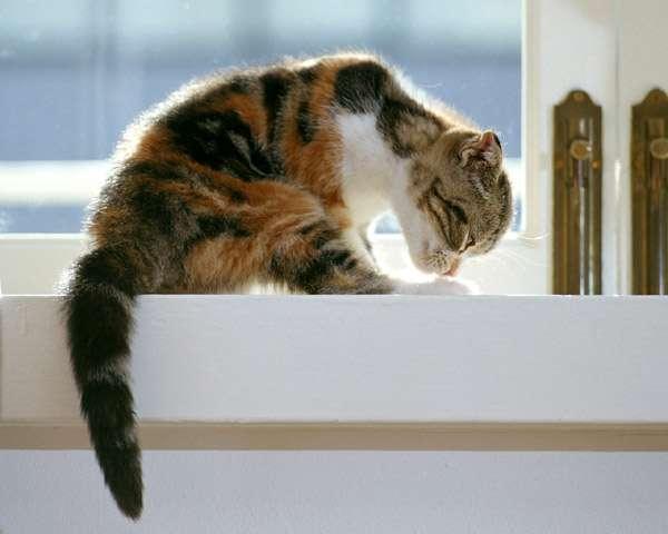 Котенок что-то нюхает, к чему-то принюхивается, фото фотография картинка