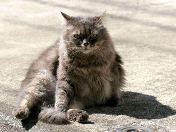 Кот с животом фото