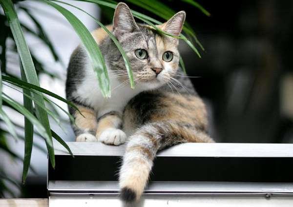 Черепахова кошка, фото кошки фотография