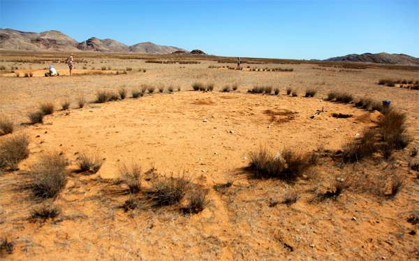 Круг в пустыне, созданный термитами, фото новости о насекомых фотография