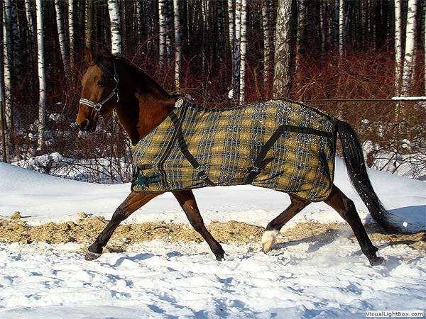 Лошадь в попоне, фото содержание лошадей фотография