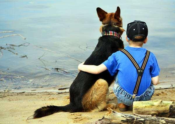 Мальчик и немецкая овчарка, фото собака и ребенок фотография
