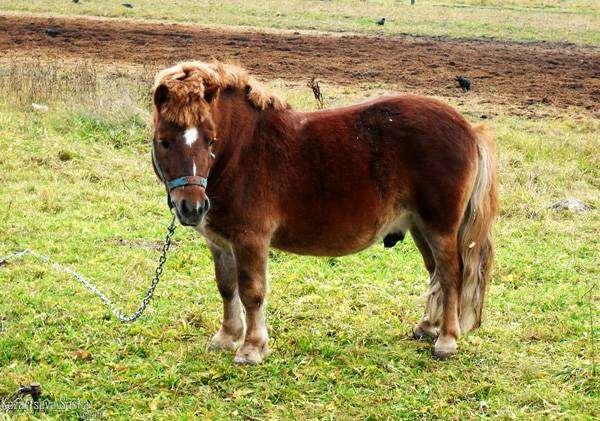 Пони, фото лошади фотография