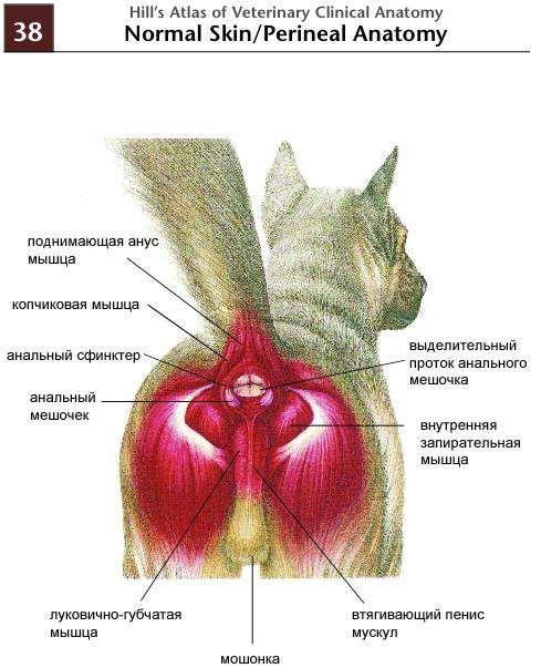 лекарства увеличивающие грудь