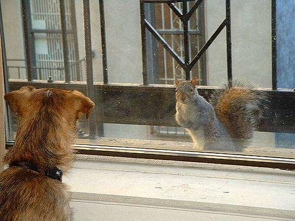 Собака и белка, фото изображение