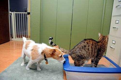 Собка лезет под хвост кошке, фото фотография