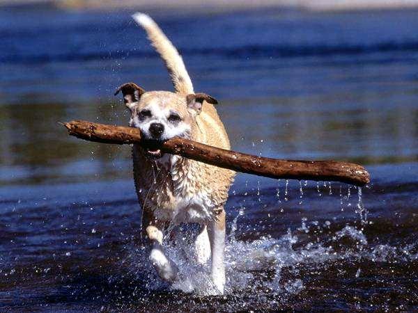 Апортирование как игра для вашей собаки отработка команды аппорт  Апортирование как игра для вашей собаки
