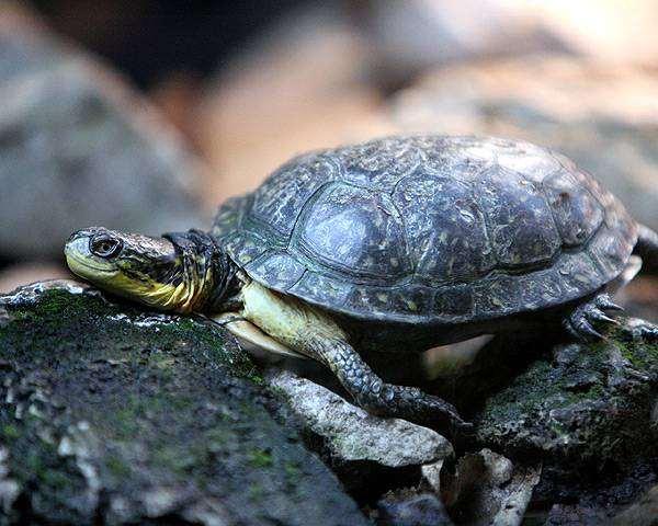 Сухопутная черепаха, фото болезни рептилий фотография