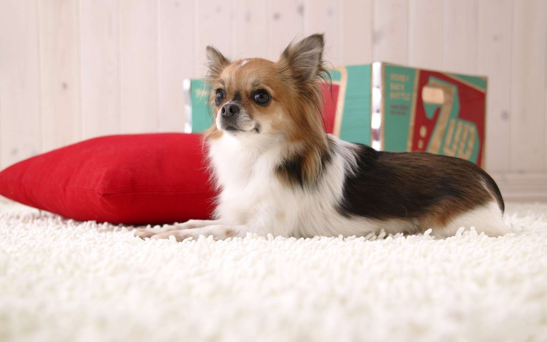 Фото родов у собак   dogzdru