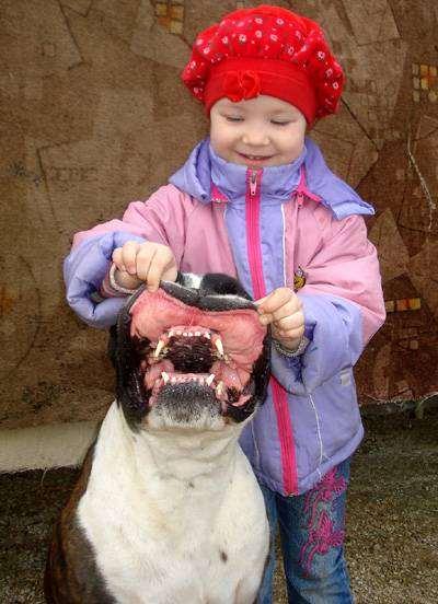 Девочка и немецкий боксер, фото собака и ребенок фотография